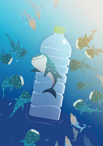 Whale shark lay on a plastic bottle surrounded by its ocean companions in a sea of rubbish.