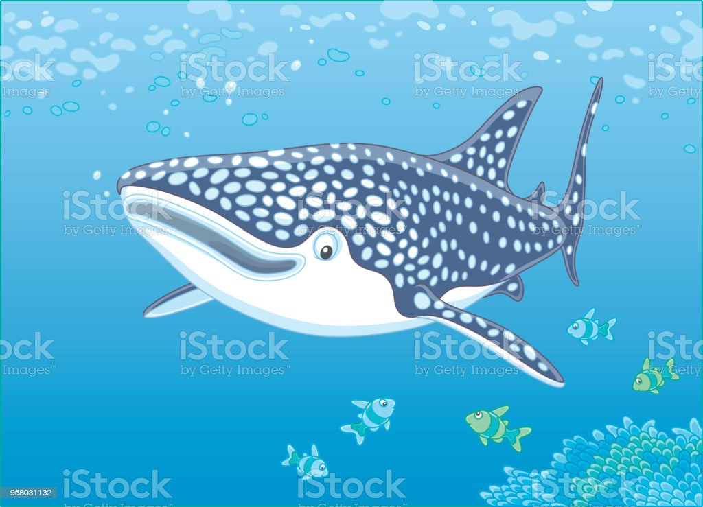 Whale shark over a reef Big basking shark and small fishes swimming over corals in blue water of a tropical sea, vector illustration in a cartoon style Animal stock vector