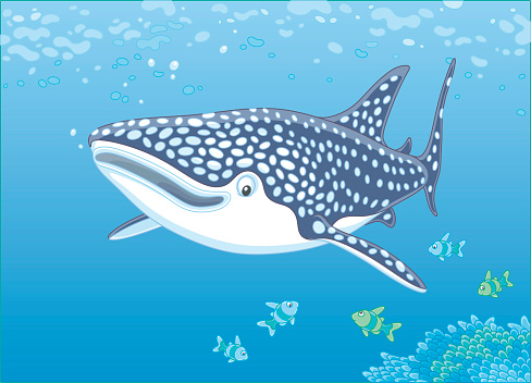 Whale Shark Over A Reef Stock Illustration - Download Image Now