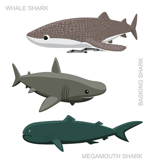 Whale Shark Set Cartoon Vector Illustration vector art illustration