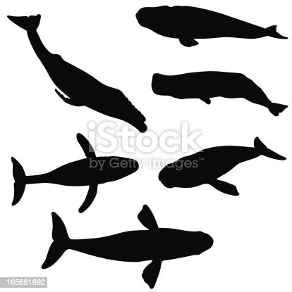 A silhouette collection of different whales.
