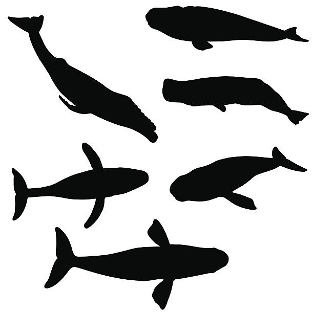 Whale silhouette collection vector art illustration