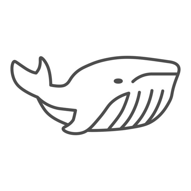 Whale thin line icon, ocean concept, very large marine mammal sign on white background, orca whale icon in outline style for mobile concept and web design. Vector graphics. Whale thin line icon, ocean concept, very large marine mammal sign on white background, orca whale icon in outline style for mobile concept and web design. Vector graphics giant fictional character stock illustrations