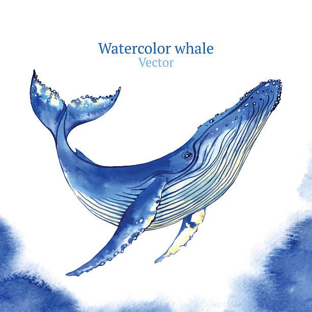 whale  - wal stock-grafiken, -clipart, -cartoons und -symbole
