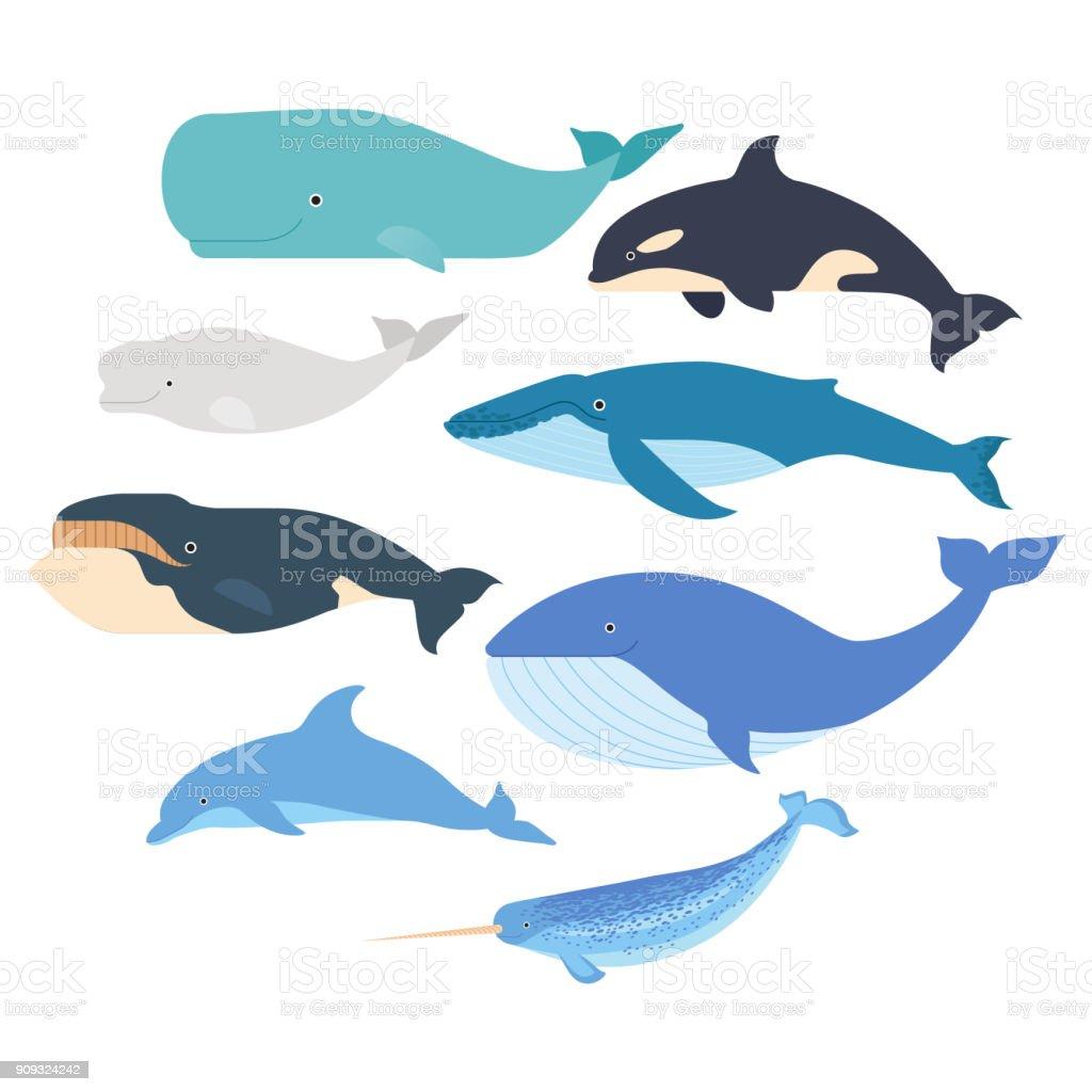 Wale und Delfine eingestellt. Meeressäuger-Abbildung. Narwal, Blauwal, Delphin, Beluga-Wal, Buckelwal, Grönlandwale und Pottwal Vektor isoliert – Vektorgrafik