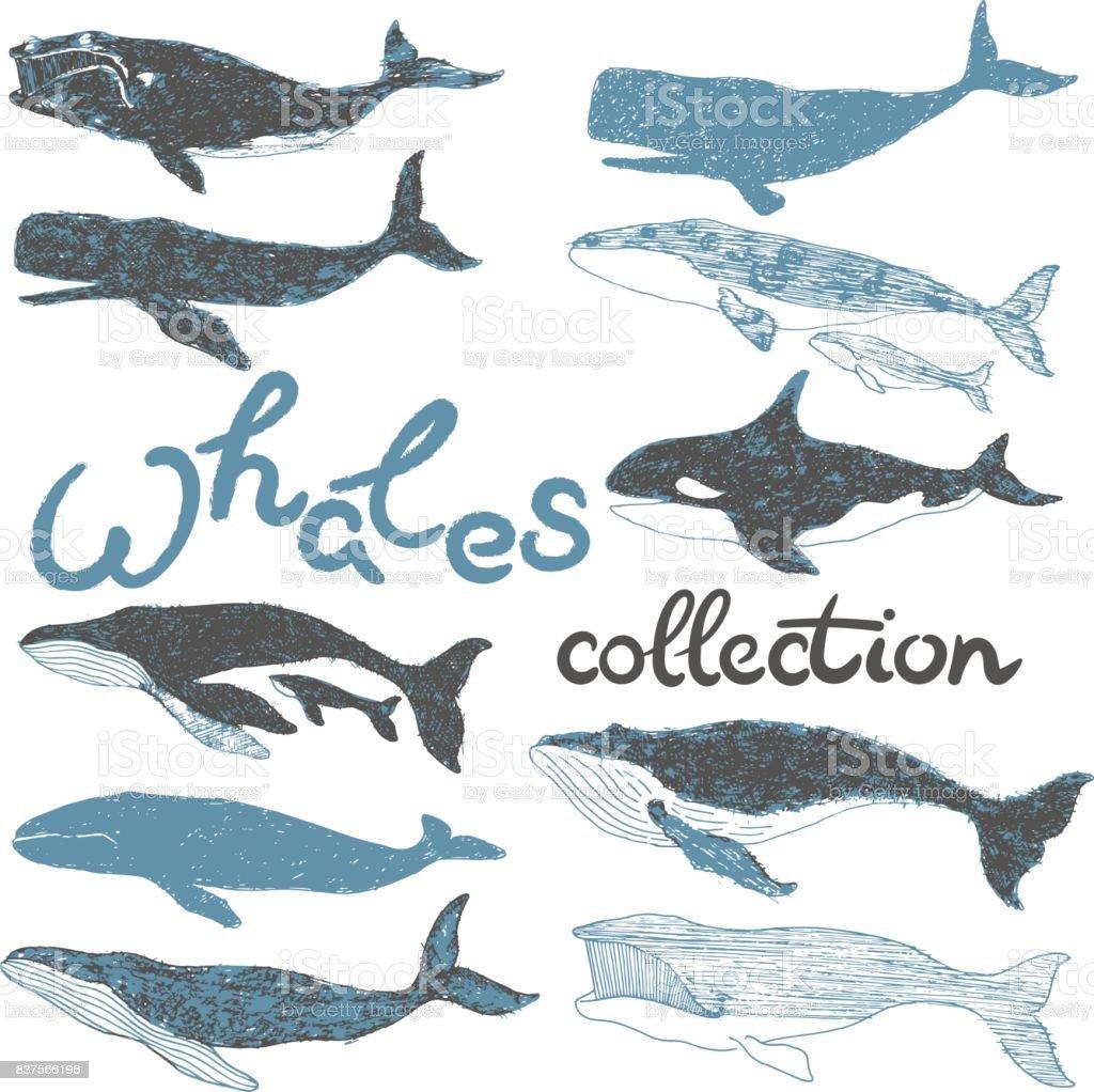 Wale Ozean Sammlungssatz Grafik illustration – Vektorgrafik