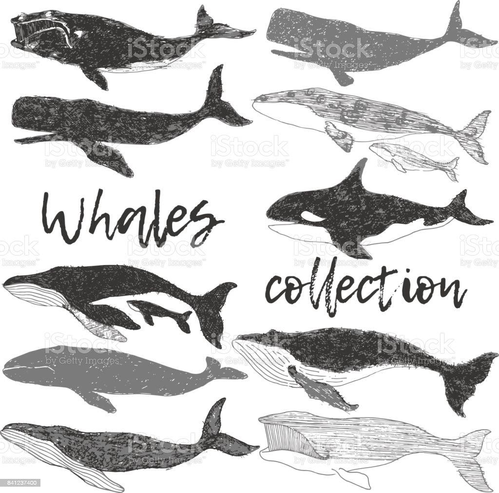 Vahşi Okyanus Hayvan Koleksiyonu El Sanat Resimde Kümesi çizimi