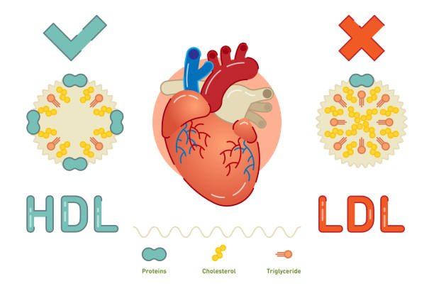 What is Lipoprotein What is Lipoprotein - illustrated explanation cholesterol stock illustrations