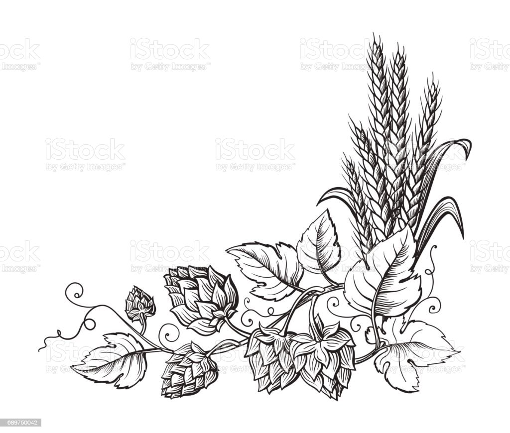 Wheat and beer hops branch with wheat ears, leaves and hop cones. vector art illustration