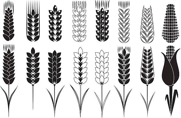 ilustraciones, imágenes clip art, dibujos animados e iconos de stock de trigo y el maíz - straw field