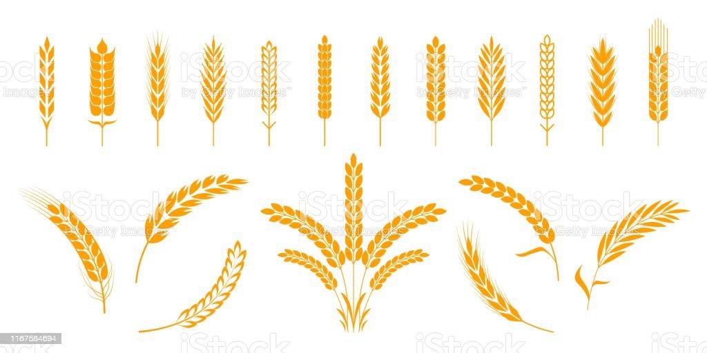 Weizen- und Roggenohren. Gerstenreiskörner und Elemente für Bärenlogo oder Bio-Agrarnahrung. Vektorisolierte heraldische Formen - Lizenzfrei Abstrakt Vektorgrafik