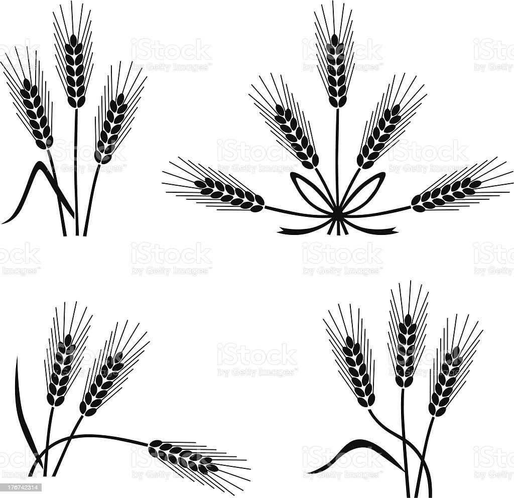 Wheat and rye royalty-free stock vector art