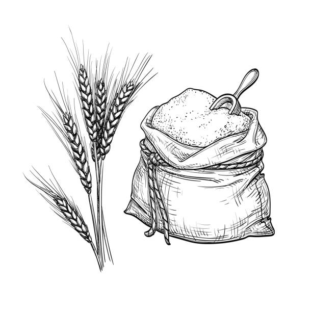 Wheat and sack of flour. Wheat and sack of flour. Hand drawn vector illustration. Isolated on white background. Retro style. bread drawings stock illustrations