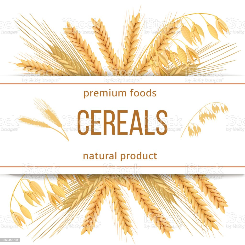 Wheat Barley Oat And Rye 3d Icon Vector Set Four Cereals
