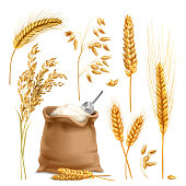 Set of realistic agricultural crops including rice, oats, wheat, barley, sack of flour isolated vector illustration