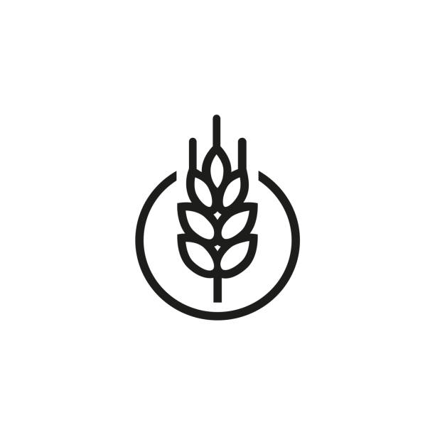 Wheat ear icon Icon of wheat ear. Bread, grain, seed. Harvest concept. Can be used for topics like agriculture, gluten plant wheat stock illustrations