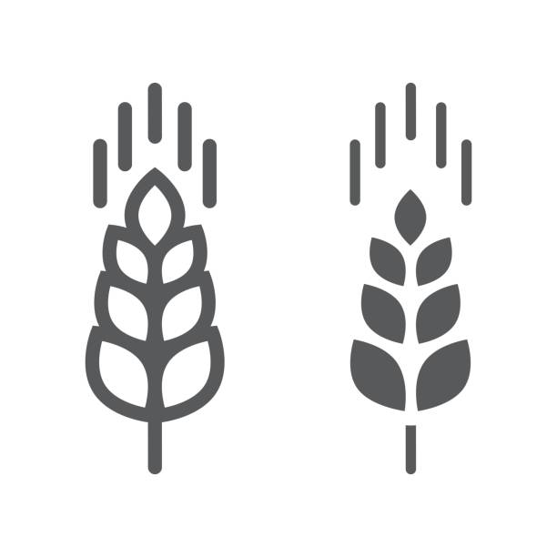 ilustrações de stock, clip art, desenhos animados e ícones de wheat ear line and glyph icon, farming and agriculture, grain sign vector graphics, a linear pattern on a white background, eps 10. - oats