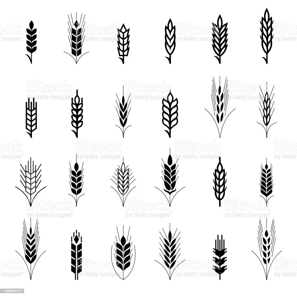 Wheat ear symbols for logo design vector art illustration