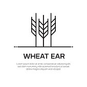 Wheat Ear Vector Line Icon - Simple Thin Line Icon, Premium Quality Design Element