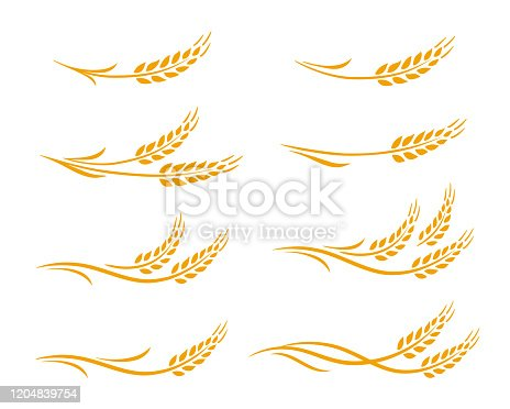 Hand drawn decorative wheat ears, oats, rye grain spikes with leaves icons set