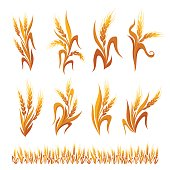 Wheat ears decorations. Cereal spikelets symbols isolated on white background.