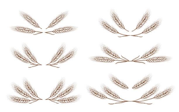 wheat ears design elements set wheat ears design elements set on white background bundle stock illustrations