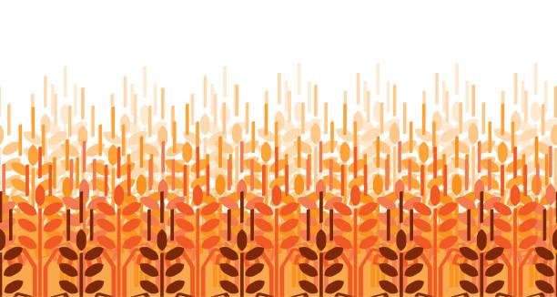 ilustraciones, imágenes clip art, dibujos animados e iconos de stock de patrón de orejas de trigo. fondo de agricultura de vector. campo de trigo - straw field