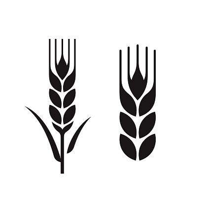 wheat ears set