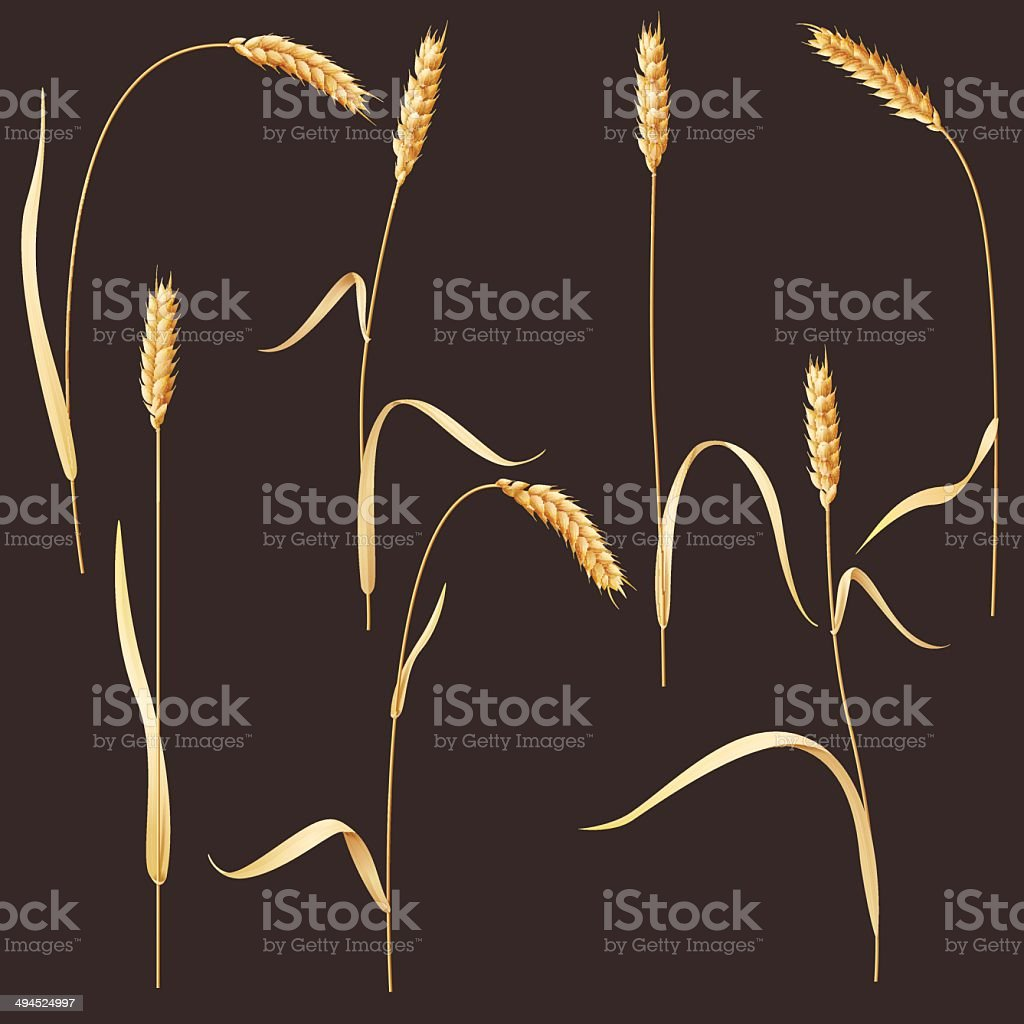 Wheat ears royalty-free stock vector art