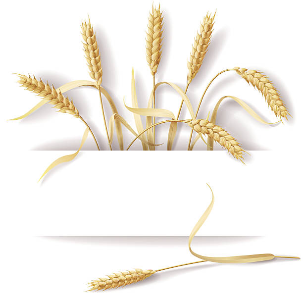 Wheat ears Wheat ears with space for text. bread borders stock illustrations