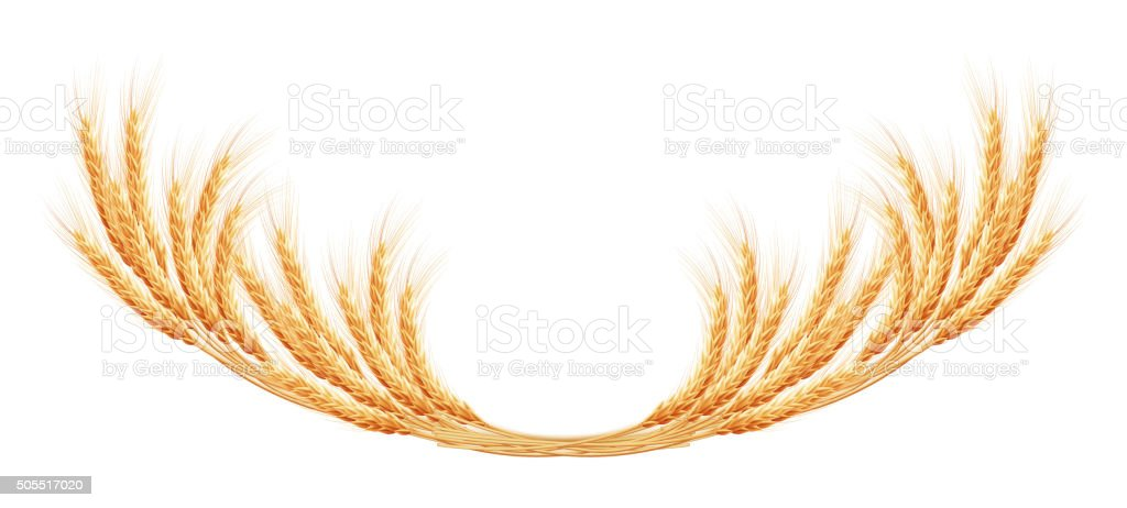 Wheat ears with space for text. EPS 10 vector art illustration