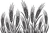 Wheat Field 1 uncrop