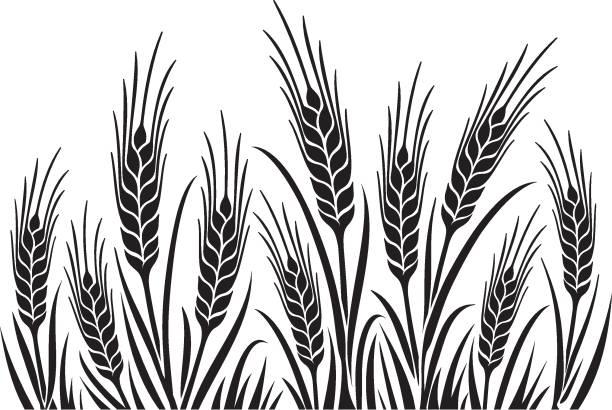 buğday alanı 1 uncrop - buğday stock illustrations