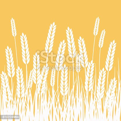 istock Wheat Field and Sun Agriculture background 610224984