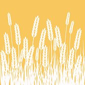 Wheat Field and Sun Agriculture background.