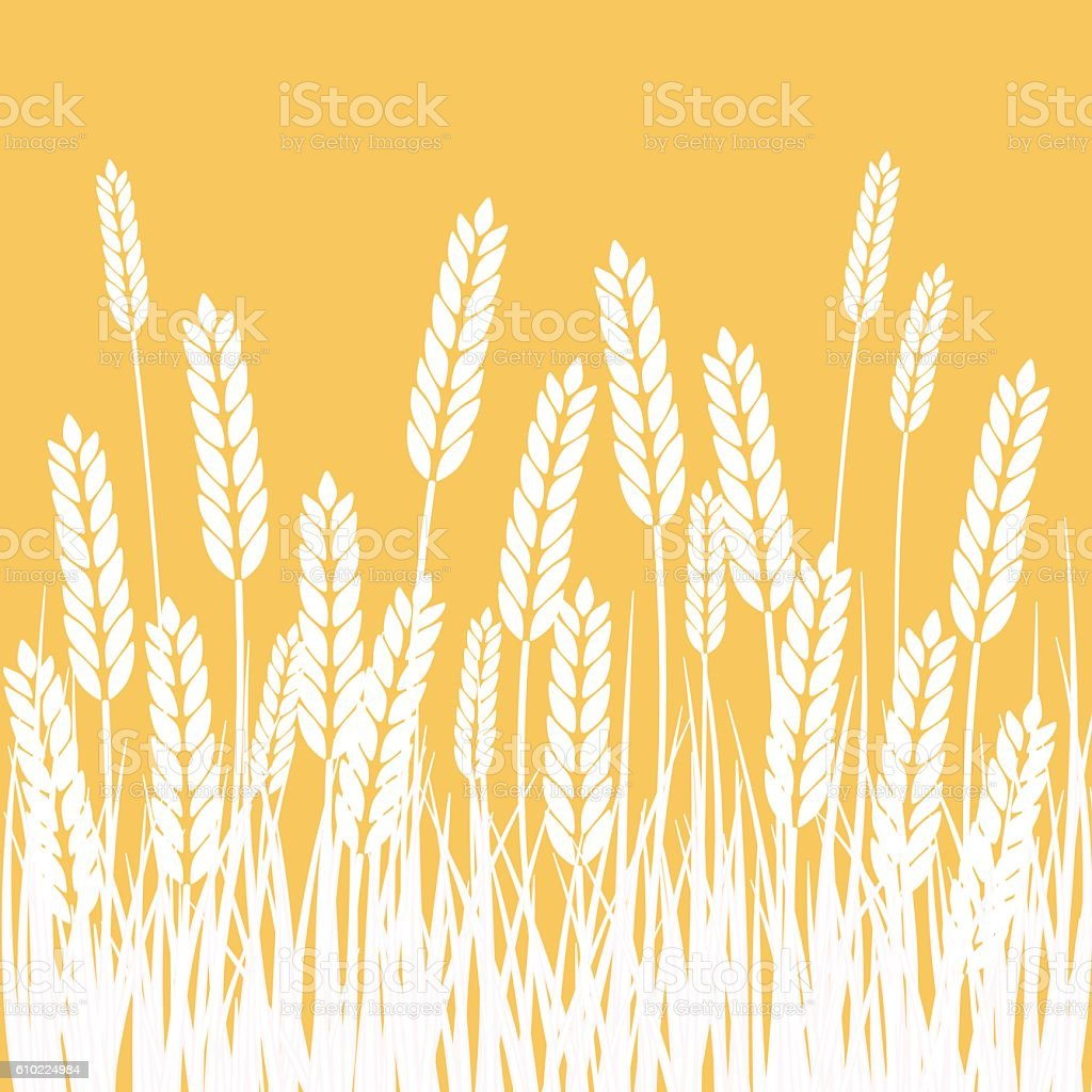Wheat Field and Sun Agriculture background vector art illustration