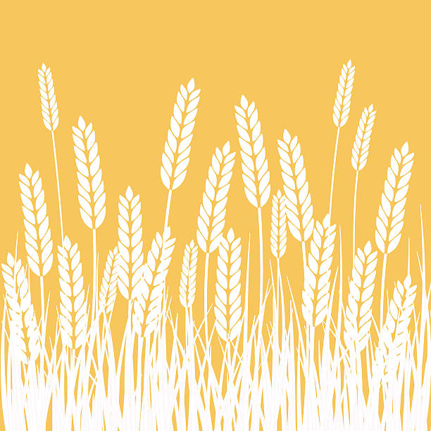 stockillustraties, clipart, cartoons en iconen met wheat field and sun agriculture background - wheat field