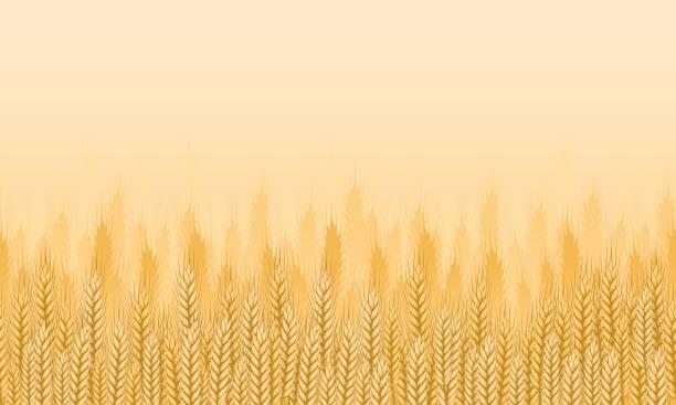 ilustraciones, imágenes clip art, dibujos animados e iconos de stock de fondo de campo de trigo - straw field