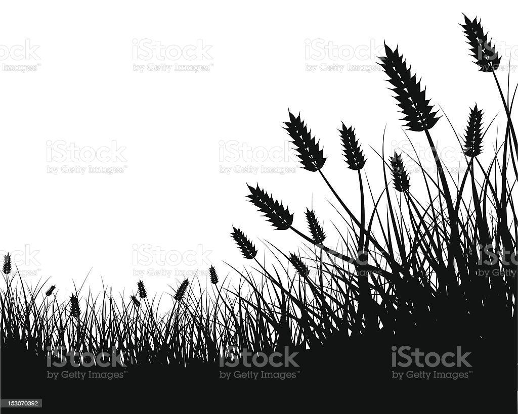Wheat Field Frame vector art illustration