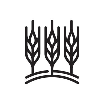 Wheat field line icon