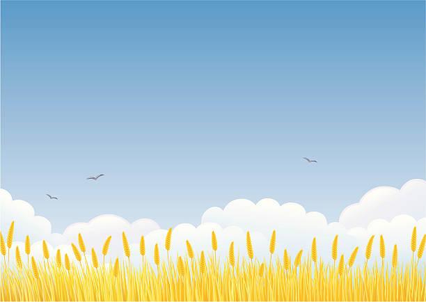 stockillustraties, clipart, cartoons en iconen met wheat field - wheat field