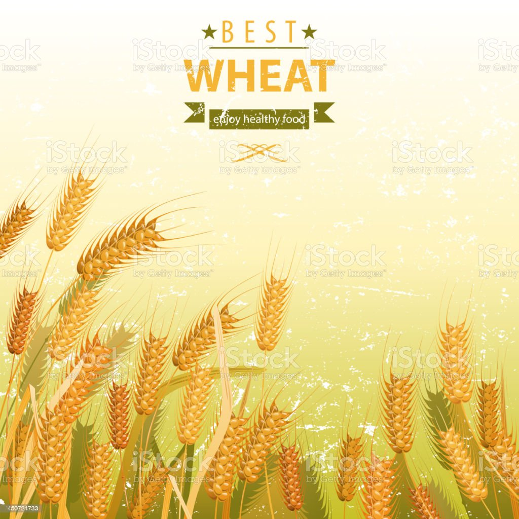 Wheat field royalty-free stock vector art
