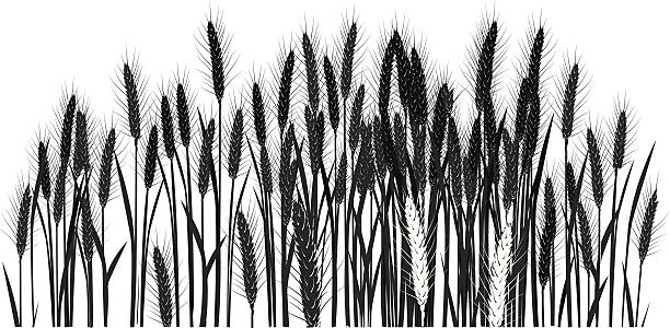 Royalty Free Wheat Field Clip Art, Vector Images ...