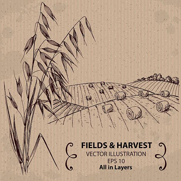 ilustraciones, imágenes clip art, dibujos animados e iconos de stock de los campos con cosecha de trigo y avena - straw field