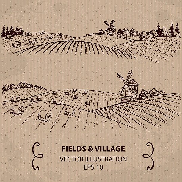 Wheat Fields with Haystacks and Windmill. Hand drawn Vector Illustration agricultural field stock illustrations