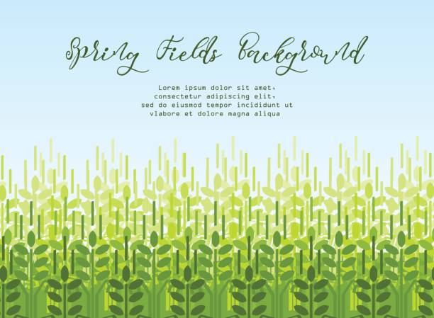 Wheat grain background. Spring agro pattern Farming spring background with green wheat shoots. Agriculture vector pattern corn crop stock illustrations