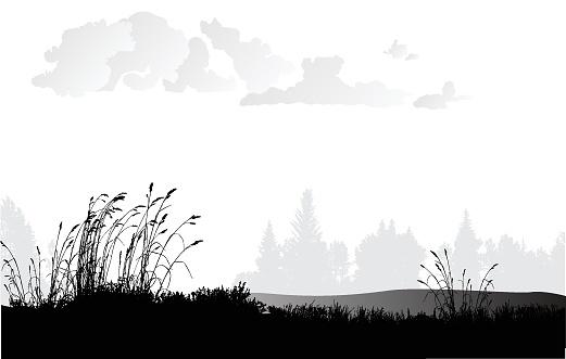 Wheat Grass Plains