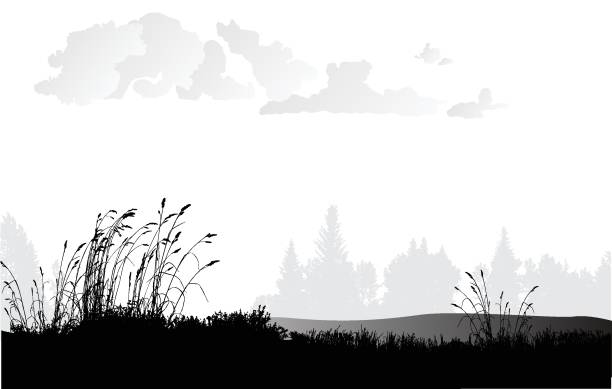 równiny trawy pszenicznej - horyzont stock illustrations