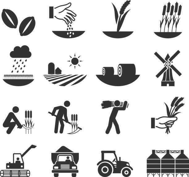 wheat harvest growth and equipment black & white icon set wheat harvest growth and equipment black & white icon set  harvesting stock illustrations