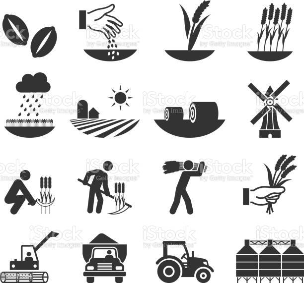 Wheat Harvest Growth And Equipment Black White Icon Set Stock Illustration - Download Image Now